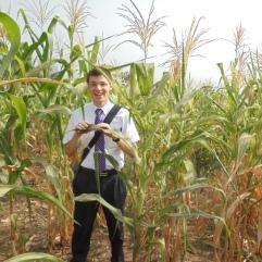 Corn in Ghana Too.